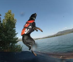 Schwimmweste Hund 21